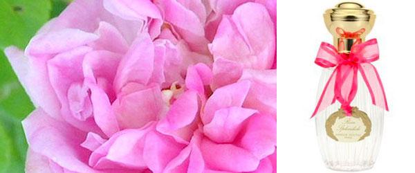 Rose Splendide. La nuova fragranza di Annick Goutal