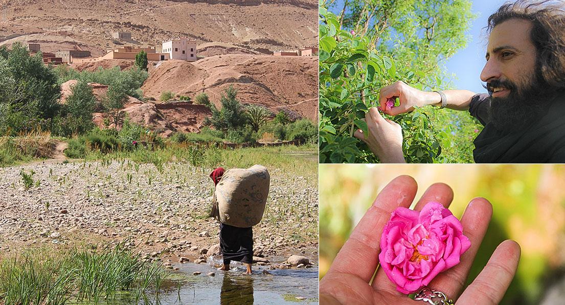 rosa marocco