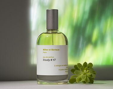 Study #17. La decima fragranza di Miller et Bertaux è una poesia dalle note verdi