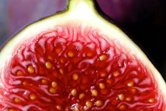 Il Fico. Il frutto proibito dell'Estate
