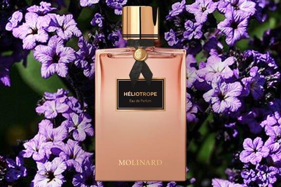 Heliotrope. Un fiorito classico dal fascino contemporaneo