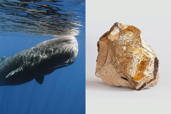 L'Ambra Grigia. Storia, miti e profumi dell'oro che arriva dal mare