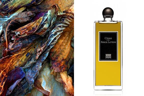 Cedre (Serge Lutens). Prospettiva olfattivo-letteraria fra Christopher Sheldrake e Arthur Rimbaud