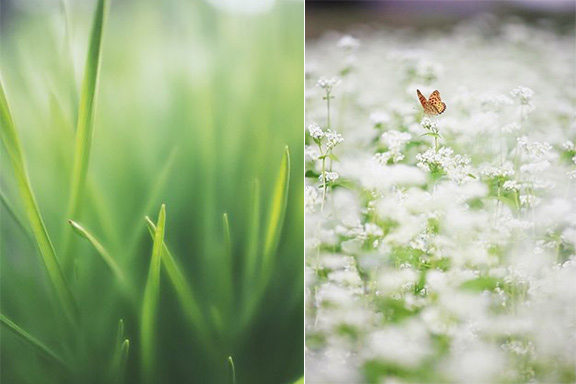 Tendenza Green: profumi a basso impatto ambientale