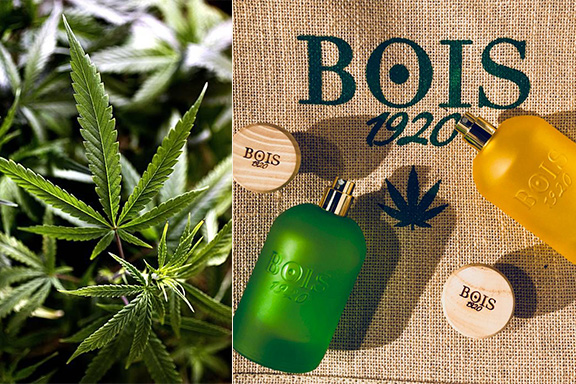 Cannabis Collection. La diade assuefacente di Bois 1920