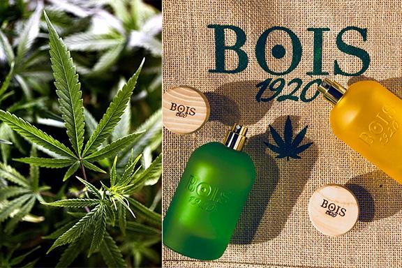Cannabis Collection. La diade assuefacente di Bois 1920