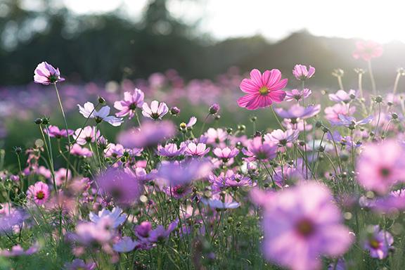 Profumi primavera 2020: le scie che illuminano la stagione dei fiori