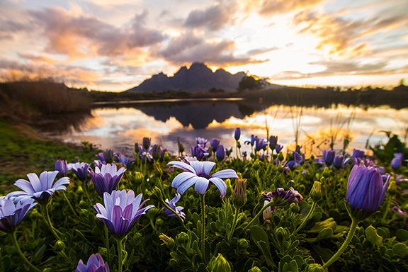 Alla scoperta del Sudafrica e dei suoi paesaggi aromatici
