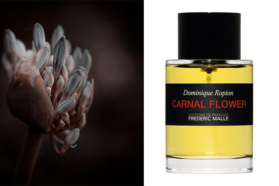 """Carnal Flower. Quella volta che Frederic Malle e Dominique Ropion domarono la """"belva"""""""